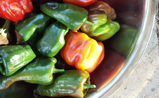 Peppers: Sow and Grow Guide